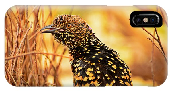 Western Bowerbird IPhone Case