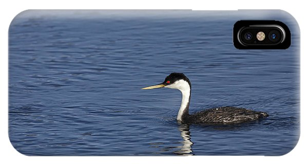 Western Grebe In Late Afternoon Light IPhone Case