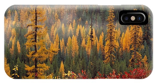 Western Larch Forest Autumn IPhone Case