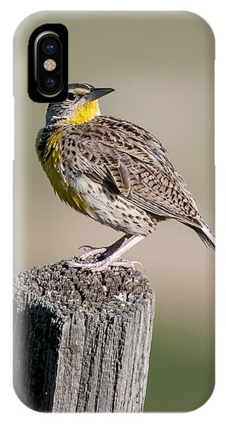 IPhone Case featuring the photograph Western Meadowlark by Gary Lengyel