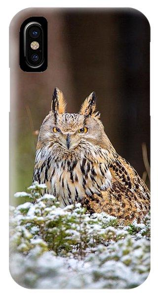 Western Siberian Owl IPhone Case