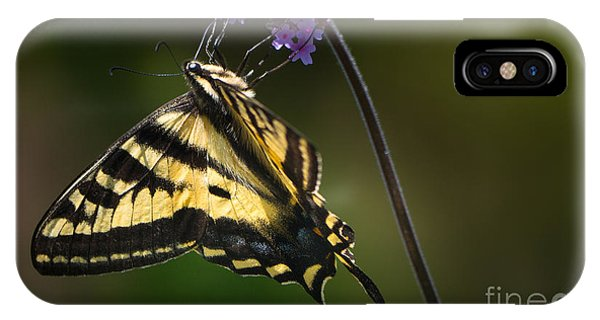 Western Tiger Swallowtail Butterfly On Purble Verbena IPhone Case