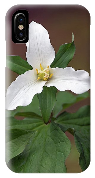 Western Trillium IPhone Case