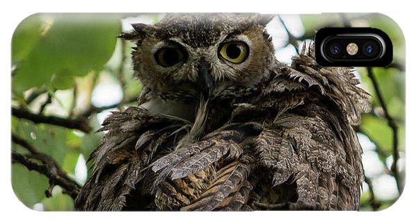 Wet Owl IPhone Case