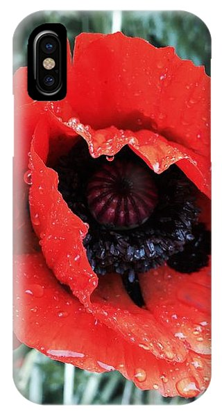 Wet Poppy IPhone Case