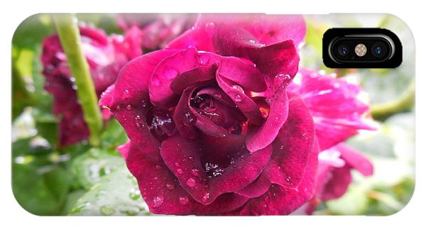 Wet Rose IPhone Case