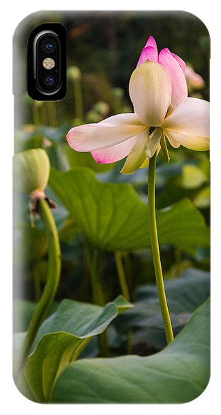 Wetland Flowers IPhone Case