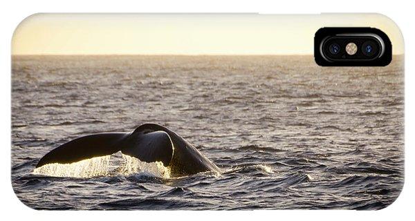 Whale Fluke IPhone Case