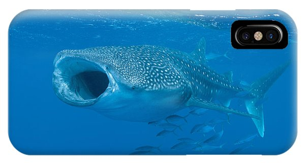 Whale Shark, Ari And Male Atoll IPhone Case