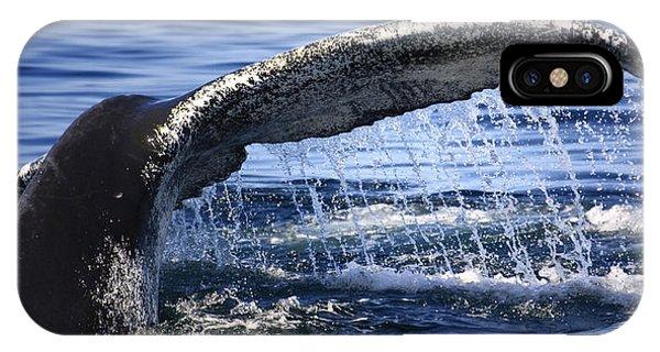 Whale Tail Phone Case by Dapixara Art