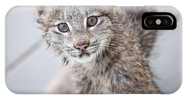 Lynx iPhone Case - What Are You by Tim Newton