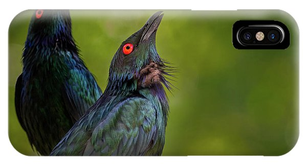 Starlings iPhone Case - What's Up There? by Jeremy Dufault