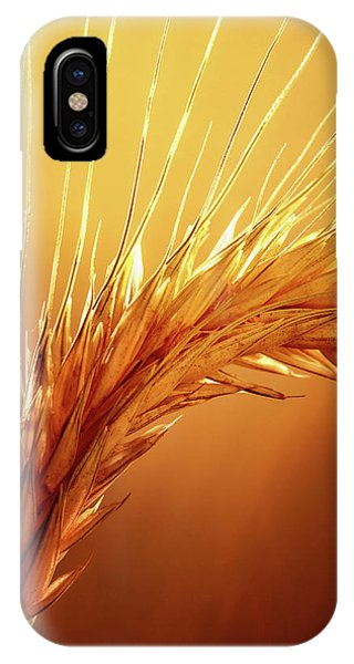 Macro iPhone Case - Wheat Close-up by Johan Swanepoel