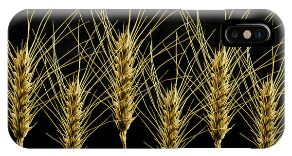 Wheat In A Row IPhone Case