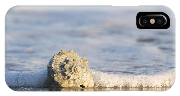 Whelk In Surf Two IPhone Case