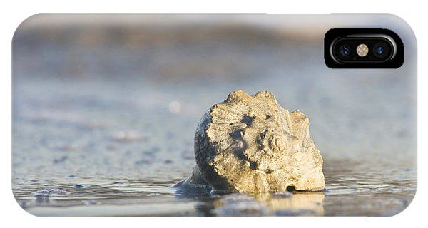 Whelk Shell In Surf IPhone Case