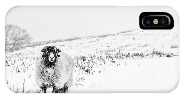 Sheep iPhone Case - Which Way Is South? by Janet Burdon