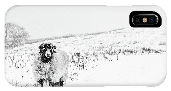 Sheep iPhone X / XS Case - Which Way Is South? by Janet Burdon