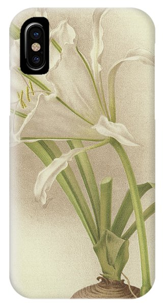 Amaryllis iPhone Case - White Amaryllis   Ismene Andreana by English School