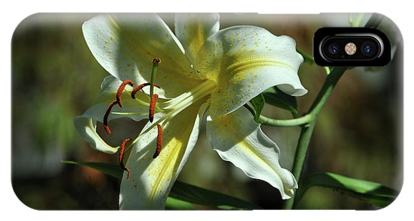 White And Yellow Asiatic Lilly No 1 IPhone Case
