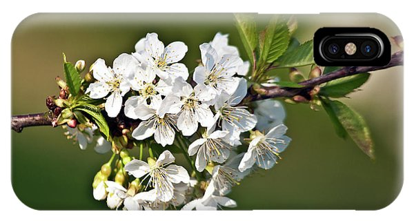 White Apple Blossoms IPhone Case