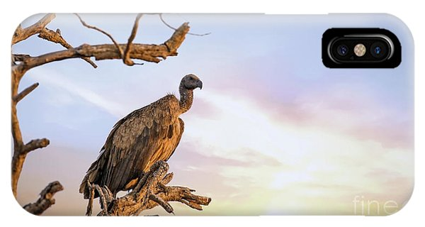 iPhone Case - White-backed Vulture At Sunset In Kruger National Park by Jane Rix