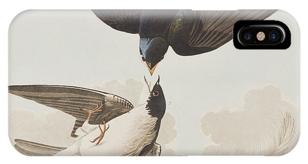 Swallow iPhone Case - White-bellied Swallow by John James Audubon