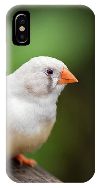 White Bird Standing On Deck IPhone Case