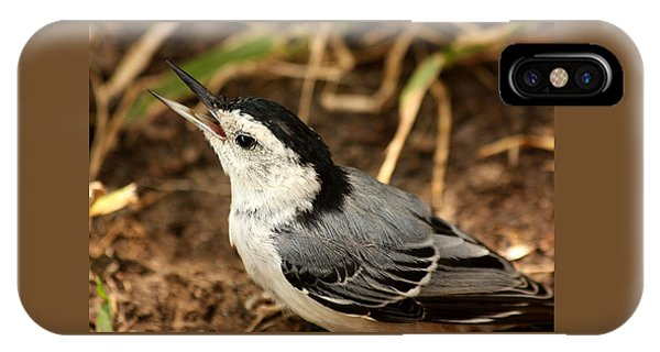 White Breasted Nuthatch 2 IPhone Case