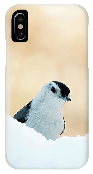 White Breasted Nuthatch In Snow IPhone Case