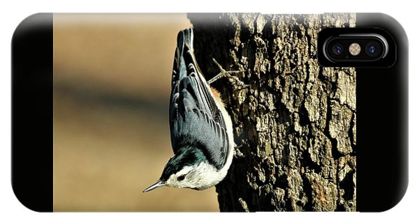 White-breasted Nuthatch On Tree IPhone Case