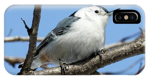 White-breasted Nuthatch Perched IPhone Case