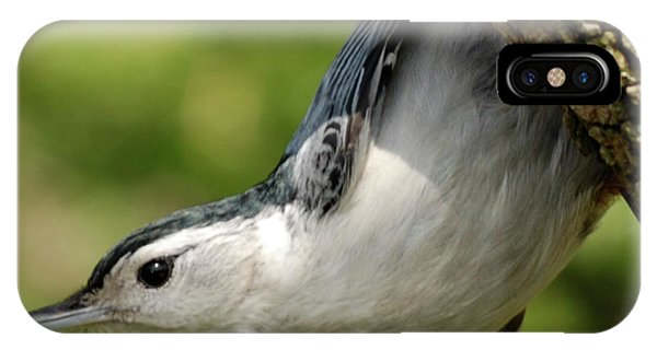 White-breasted Nuthatch IPhone Case