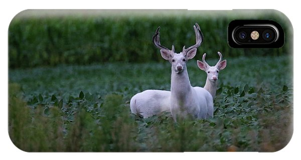 White Bucks IPhone Case