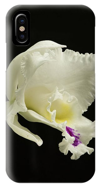 White Cattleya Orchid  IPhone Case