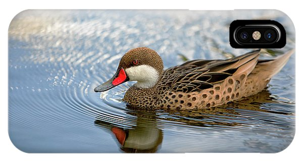 White-cheeked Pintail IPhone Case