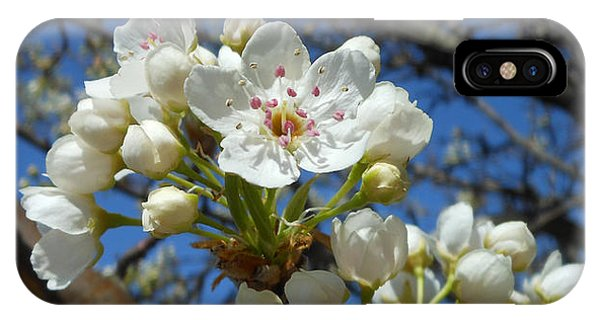 White Blossoms Blooming IPhone Case
