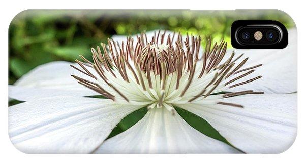 White Clematis Flower Garden 50146 IPhone Case