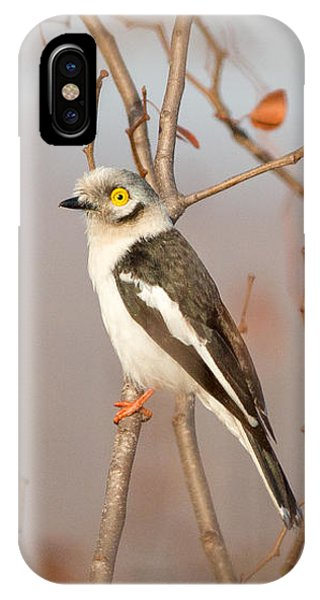 IPhone Case featuring the photograph White-crested Helmet-shrike - Bagadais Casque - Prionops Plumatus by Nature and Wildlife Photography
