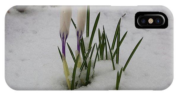 White Crocus In Snow IPhone Case