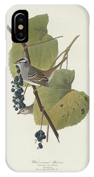 White-crowned Sparrow IPhone Case