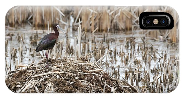 Horicon Marsh iPhone Case - White-faced Ibis 2017-1 by Thomas Young