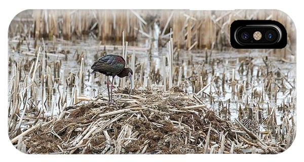 Horicon Marsh iPhone Case - White-faced Ibis 2017-2 by Thomas Young