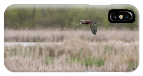 Horicon Marsh iPhone Case - White-faced Ibis 2017-3 by Thomas Young