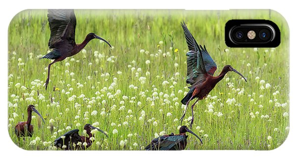 White-faced Ibis Rising, No. 1 IPhone Case