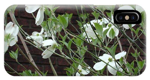 White Flowering Dogwood IPhone Case