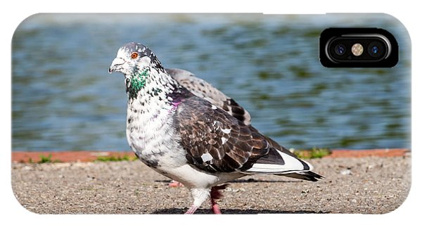 White-gray Pigeon IPhone Case