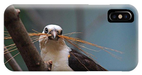 White-headed Buffalo Weaver IPhone Case