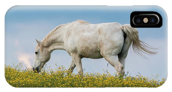 White Horse Of Cataloochee Ranch 2 - May 30 2017 IPhone Case