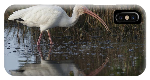 White Ibis Feeding IPhone Case